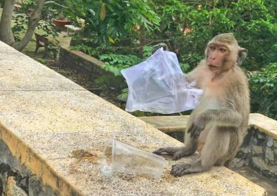 monkey_and_bag_zero_waste_saigon