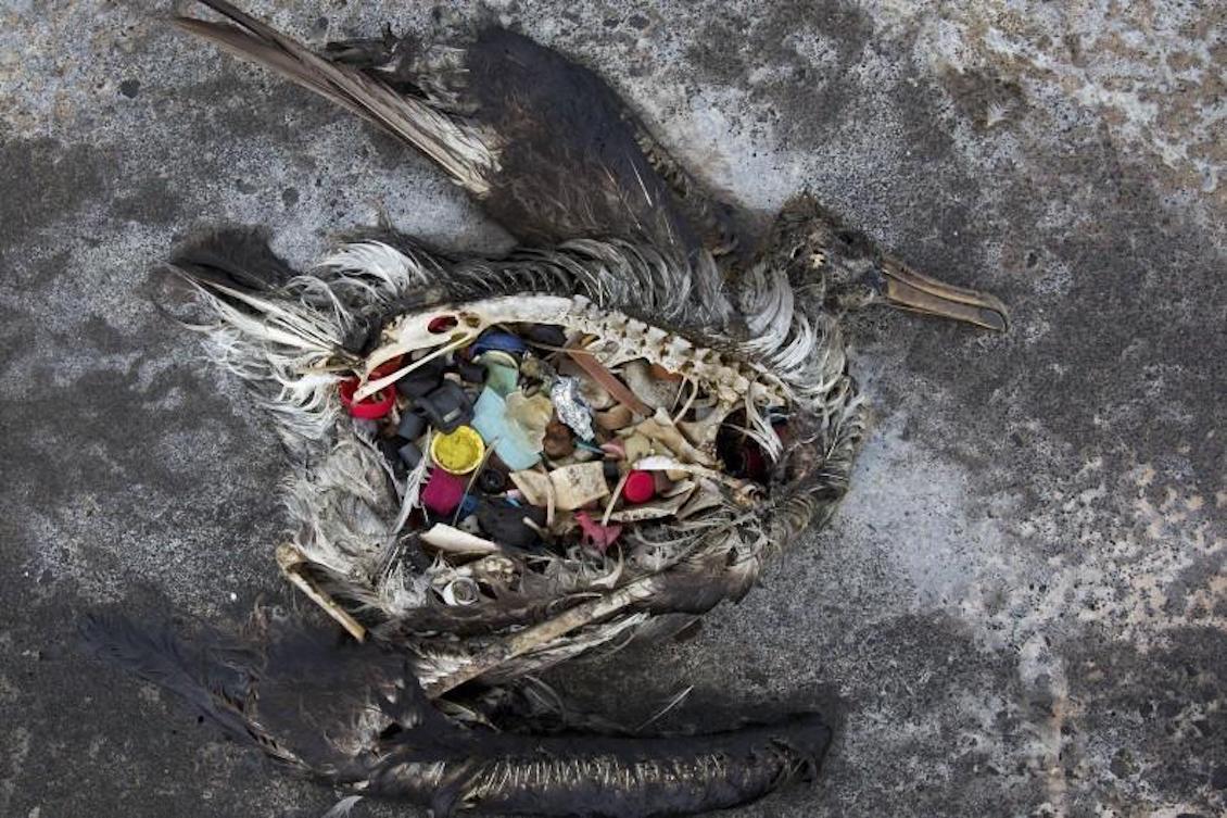 Zero Waste Saigon presentation slide 8