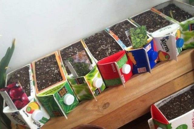carton-garden-resize