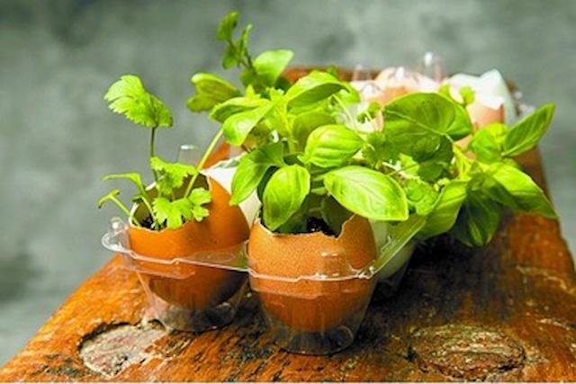 egg-garden-resize